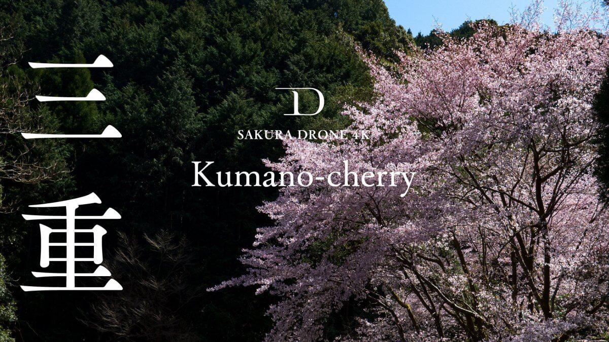 三重県御浜町のクマノザクラ|桜ドローンプロジェクト2020