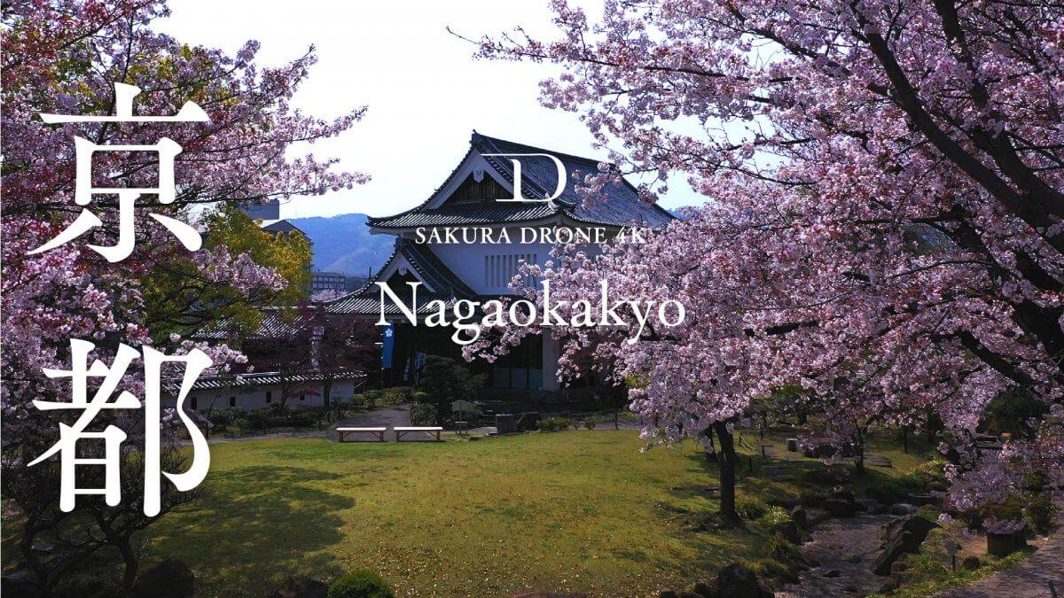 京都府長岡京市の桜|桜ドローンプロジェクト2020