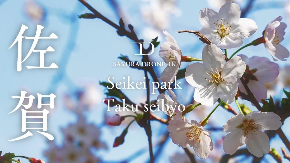 西渓公園の桜(佐賀県多久市)|桜ドローンプロジェクト2020