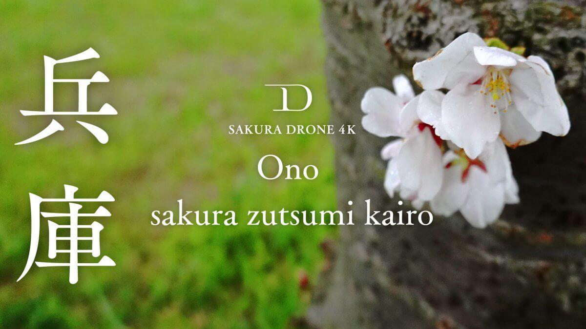 おの桜つづみ回廊(兵庫県小野市)|桜ドローンプロジェクト2020
