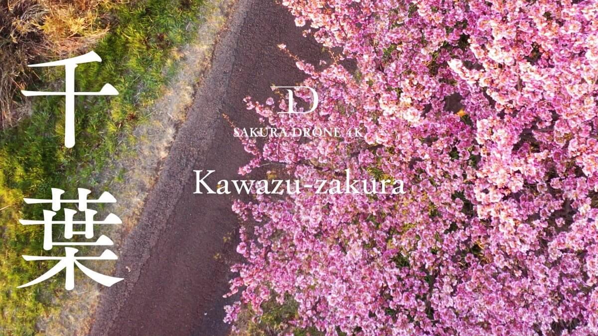 千葉県八千代市のカワヅザクラ(河津桜)|桜ドローンプロジェクト2020