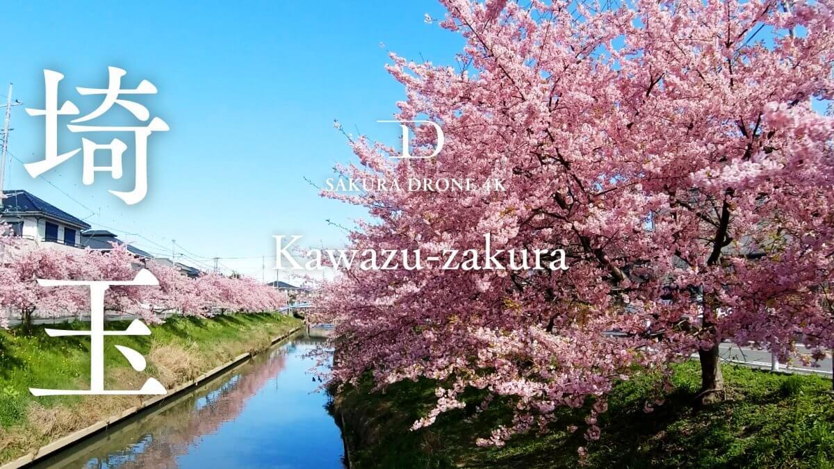 埼玉県久喜市のカワヅザクラ(河津桜) |桜ドローンプロジェクト2020