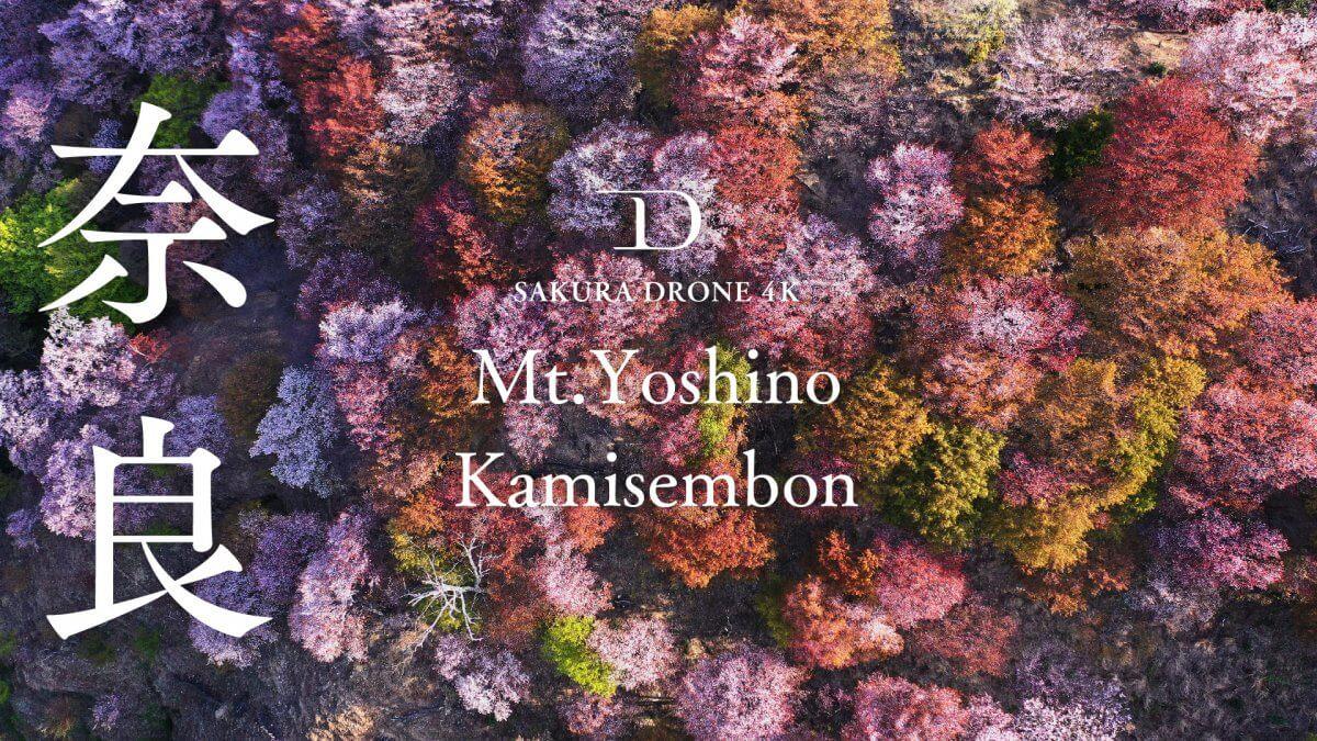 吉野山のヤマザクラ(奈良県吉野郡)|桜ドローンプロジェクト2020