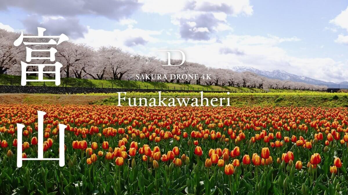 富山県朝日町の『春の四重奏』|桜ドローンプロジェクト2020