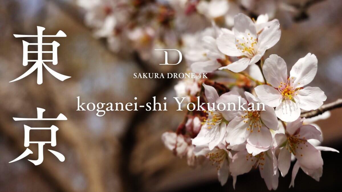 浴恩館のソメイヨシノ(東京都小金井市)|桜ドローンプロジェクト2020
