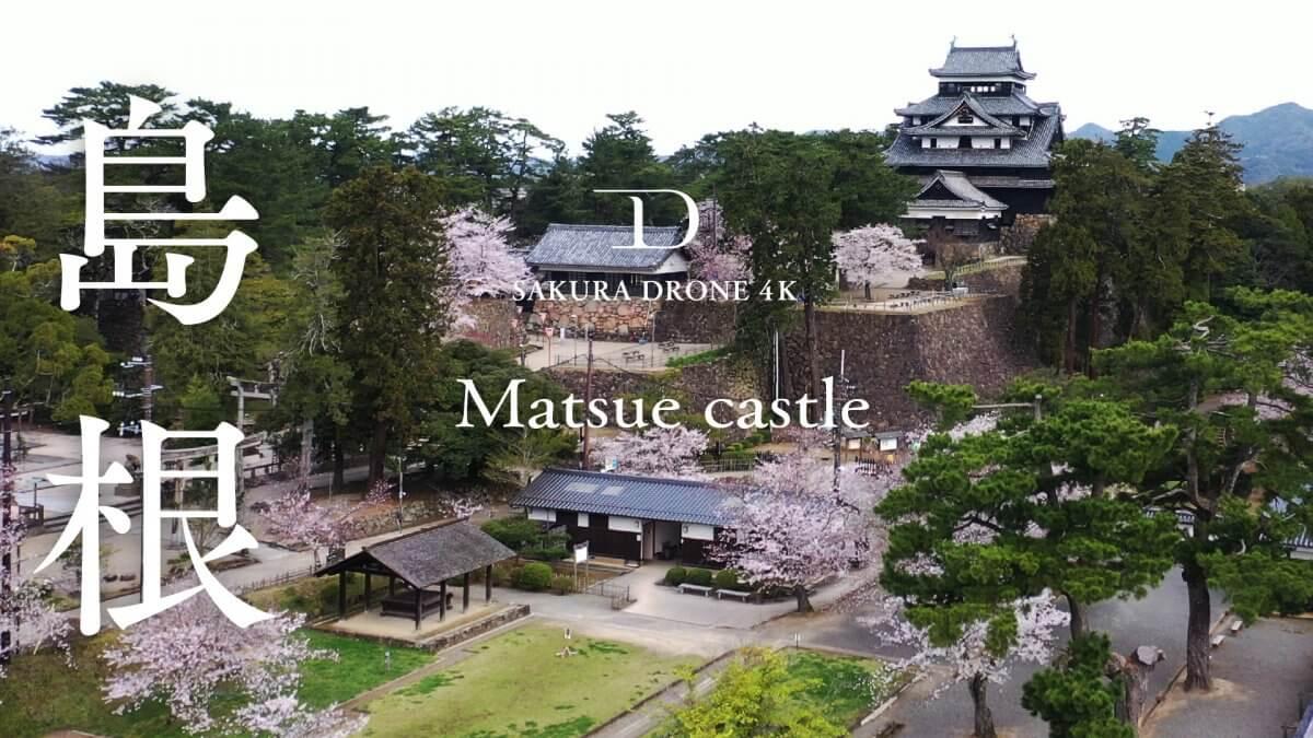 松江城とソメイヨシノ(島根県)|桜ドローンプロジェクト2020