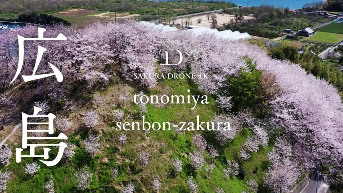 広島県佐木島の塔の峰千本桜|桜ドローンプロジェクト2020