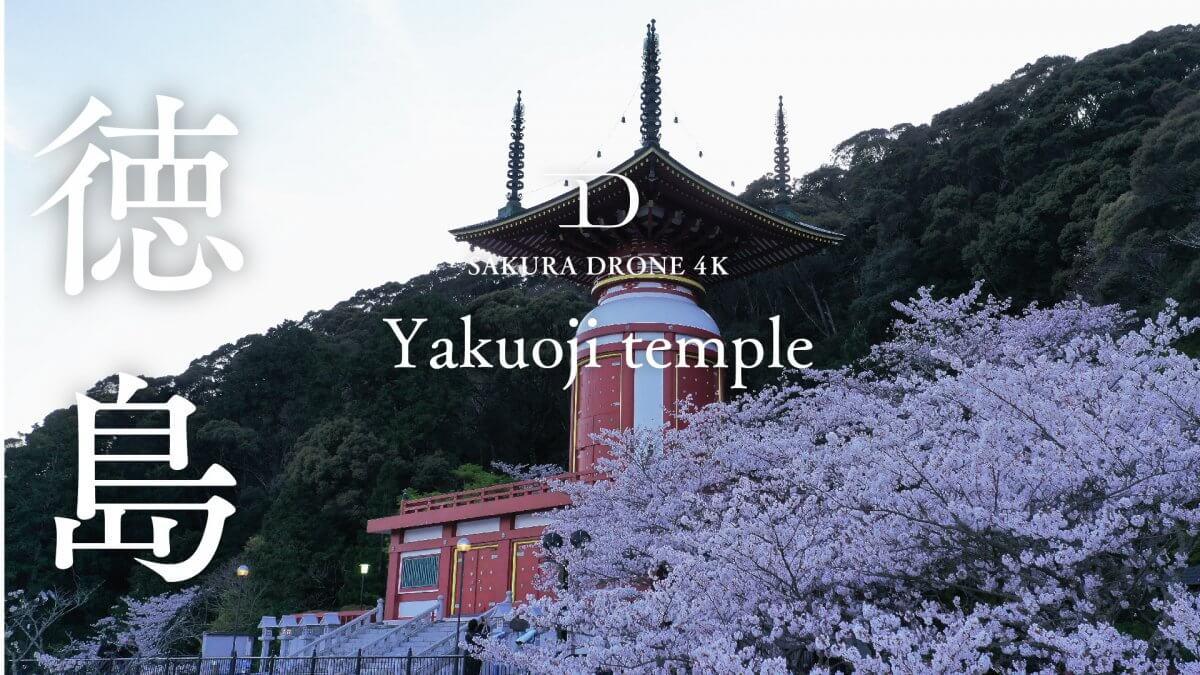 薬王寺の桜(徳島県海部郡美波町)|桜ドローンプロジェクト2020