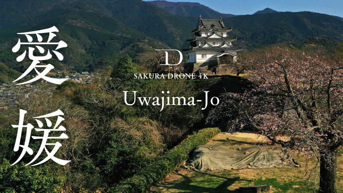 宇和島城の桜(愛媛県宇和島市)|桜ドローンプロジェクト2020