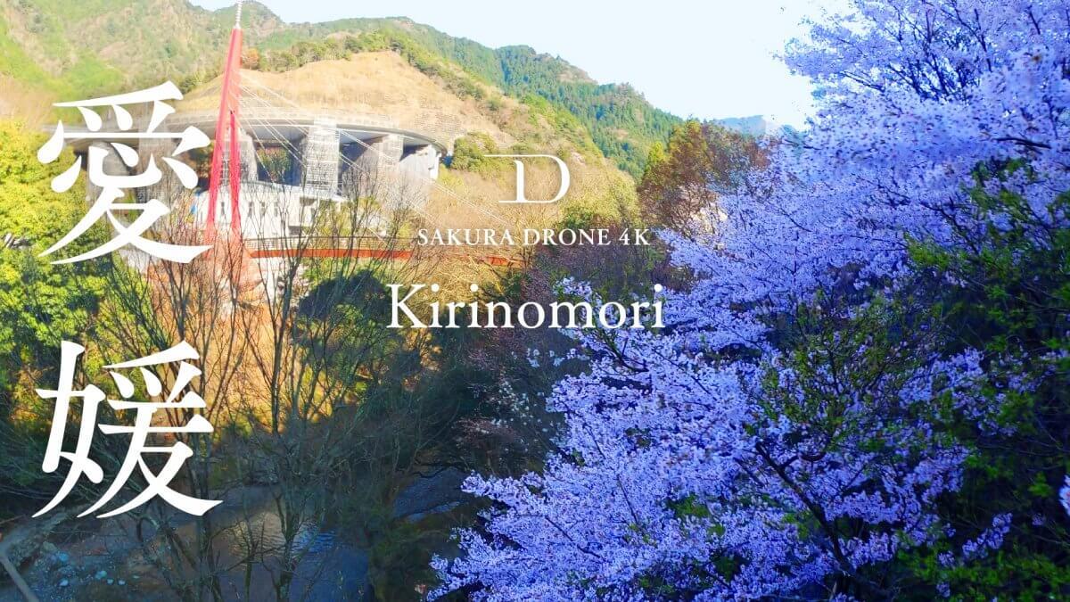 霧の森の桜(愛媛県四国中央市)|桜ドローンプロジェクト2020
