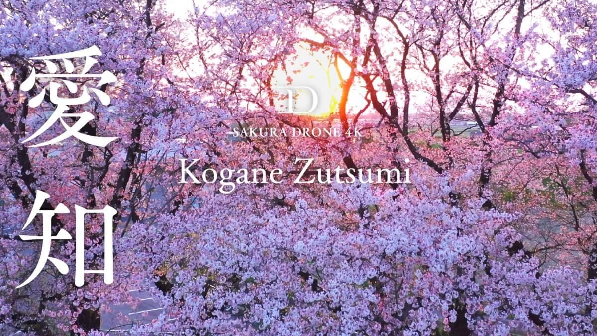 黄金堤の桜(愛知県西尾市)|桜ドローンプロジェクト2020