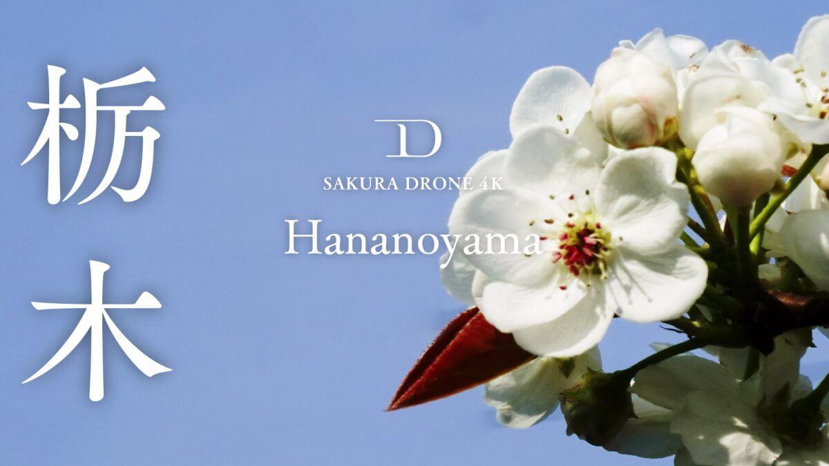 栃木県芳賀郡の『花の山』|桜ドローンプロジェクト2020