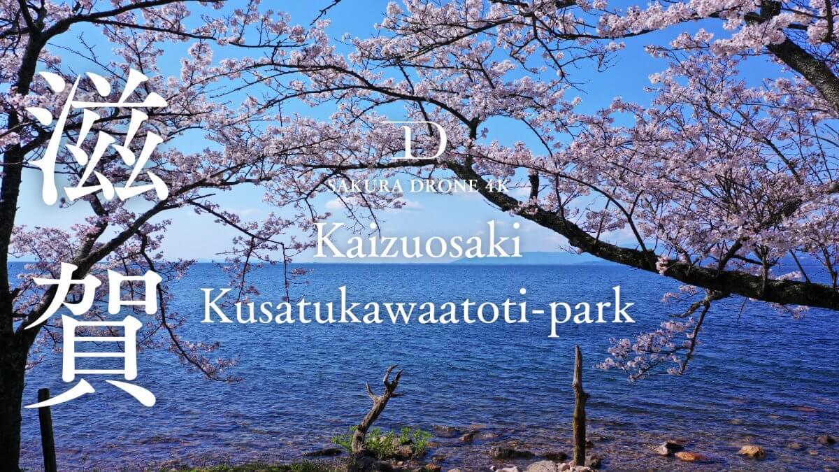 滋賀県海津大崎と草津川跡地公園の桜|桜ドローンプロジェクト2020