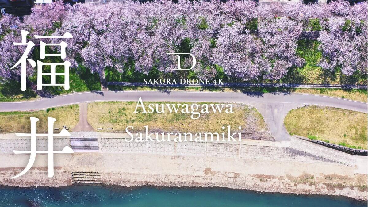 足羽川の桜並木(福井県福井市)|桜ドローンプロジェクト2020