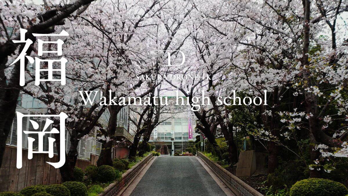福岡県立若松高等学校若松高校のソメイヨシノ(染井吉野)|桜ドローンプロジェクト2020