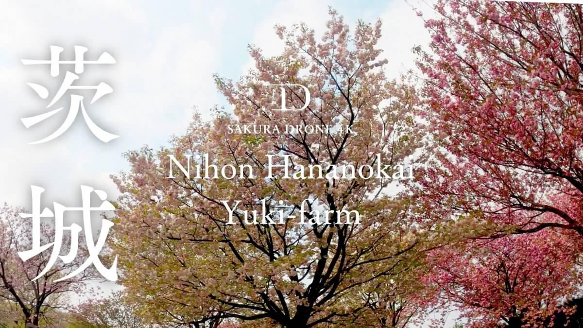 日本花の会結城農場の桜(茨城県)|桜ドローンプロジェクト2020