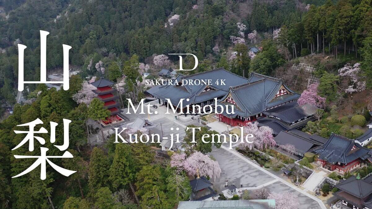 身延山久遠寺のシダレザクラ(山梨県)|桜ドローンプロジェクト2020