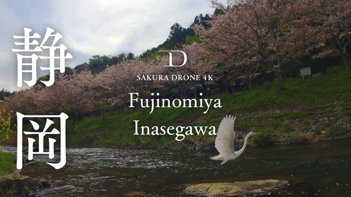 稲瀬川の桜並木(静岡県富士宮市)|桜ドローンプロジェクト2020