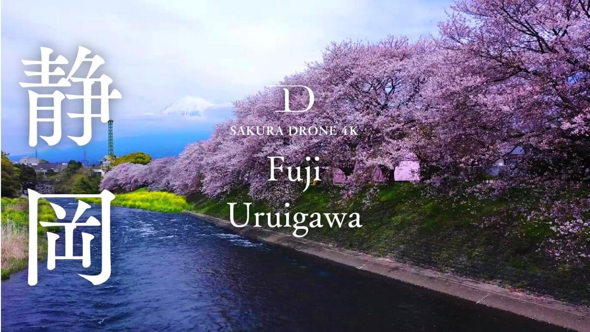 潤井川の桜(静岡県富士市)|桜ドローンプロジェクト2020