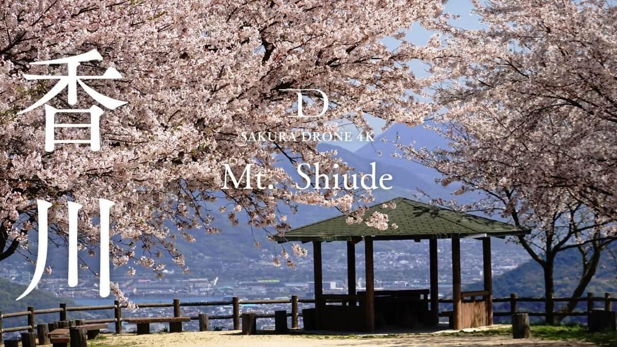 紫雲出山の桜(香川県三豊市)|桜ドローンプロジェクト2020