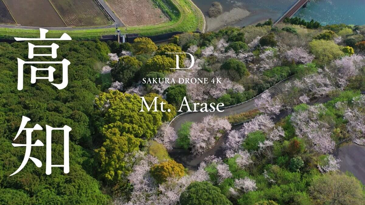 荒瀬山の桜(高知県宿毛市)|桜ドローンプロジェクト2020