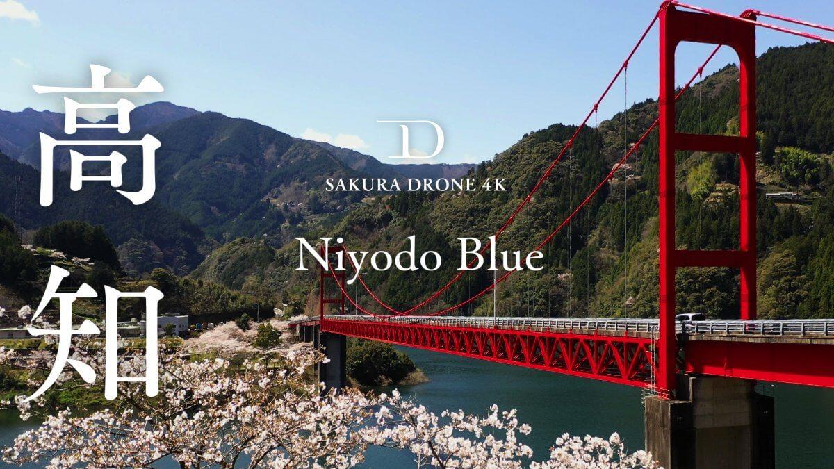 仁淀ブルーと桜(高知県仁淀川町)|桜ドローンプロジェクト2020