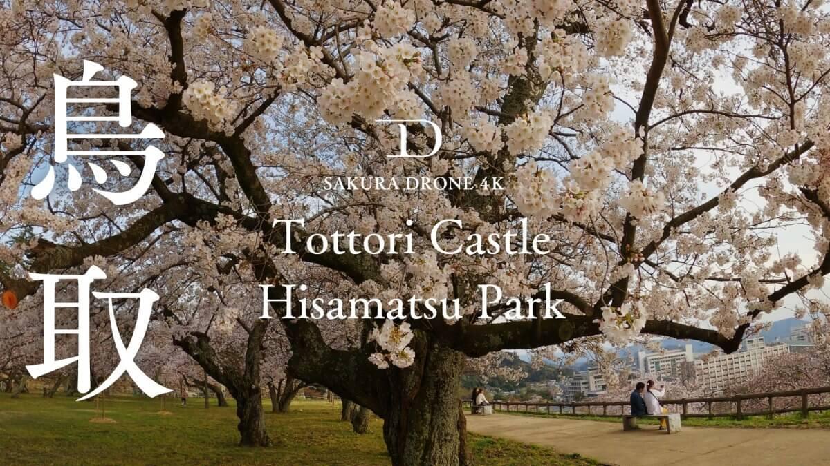 鳥取城址(久松公園)の桜|桜ドローンプロジェクト2020