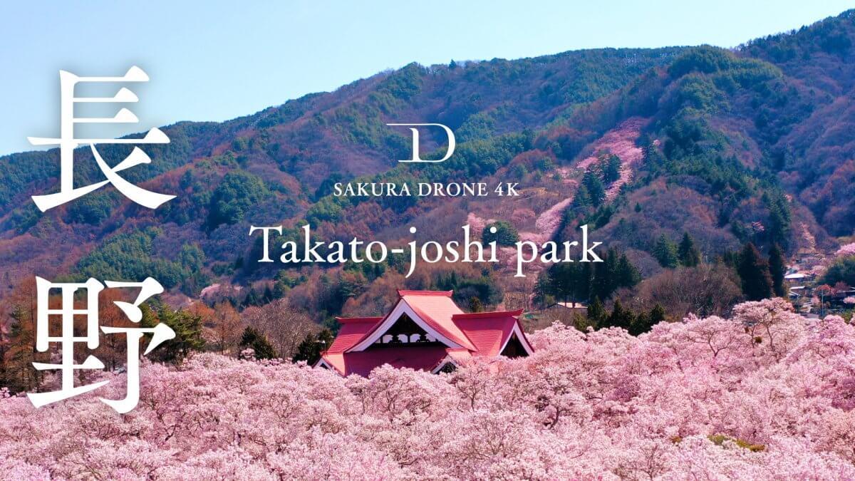 高遠城址公園のタカトオコヒガンザクラ(長野県伊那市)|桜ドローンプロジェクト2020