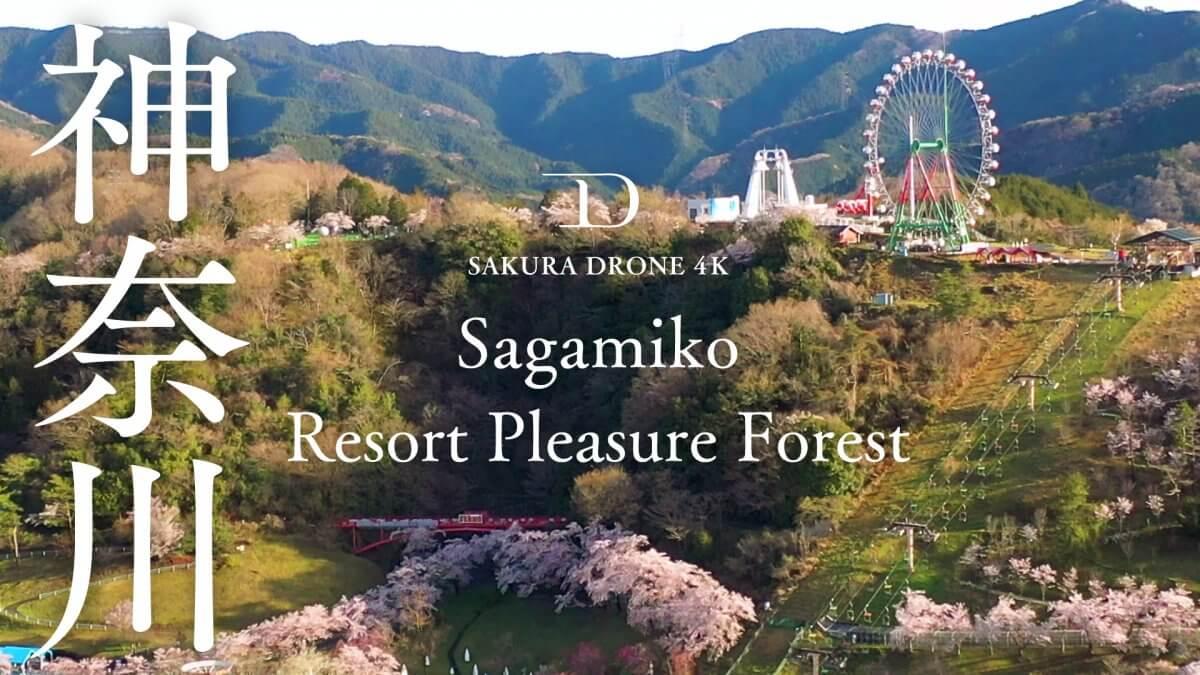 さがみ湖リゾートプレジャーフォレスト(神奈川県相模原市)|桜ドローンプロジェクト2020