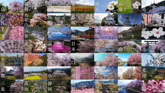 【桜ドローンプロジェクト2021】お花見期間限定!「渋谷横丁」で日本全国の桜映像の提供を開始