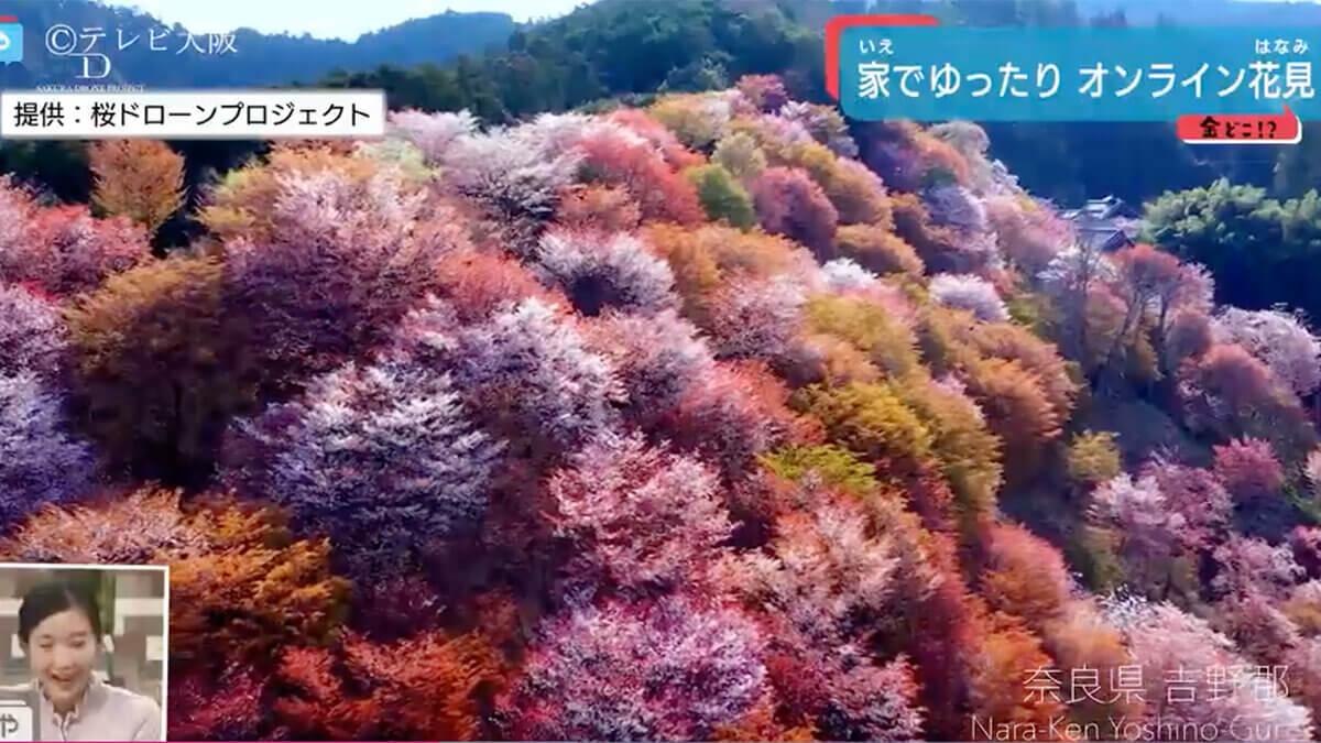 テレビ大阪「やさしいニュース」で「オンライン花見」が紹介されました!