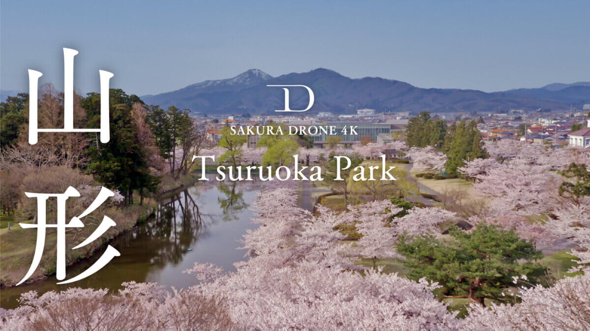 山形県の桜映像『鶴岡市鶴岡公園』|桜ドローンプロジェクト2021